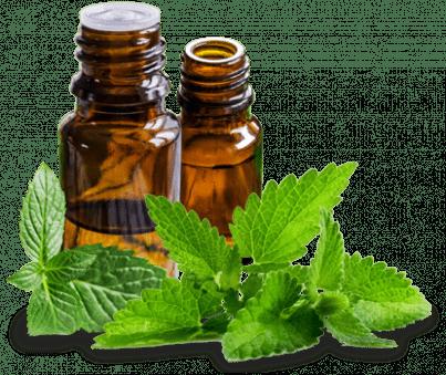 Mint Oil for Premature Ejaculation - Genericpharmausa